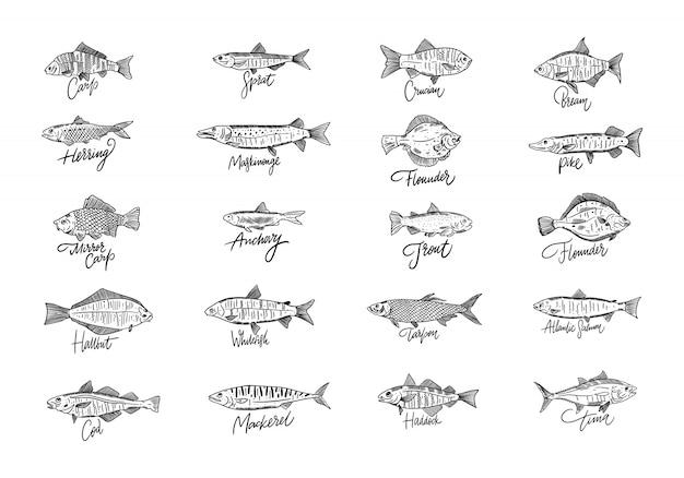 Zestaw Ryb Ręcznie Rysowane Owoce Morza. Styl Grawerowania. Premium Wektorów