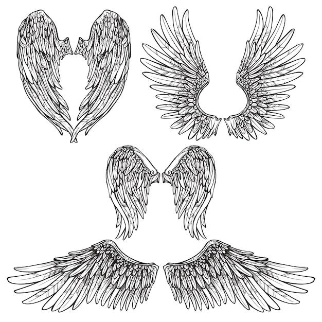 Zestaw szkiców wings Darmowych Wektorów