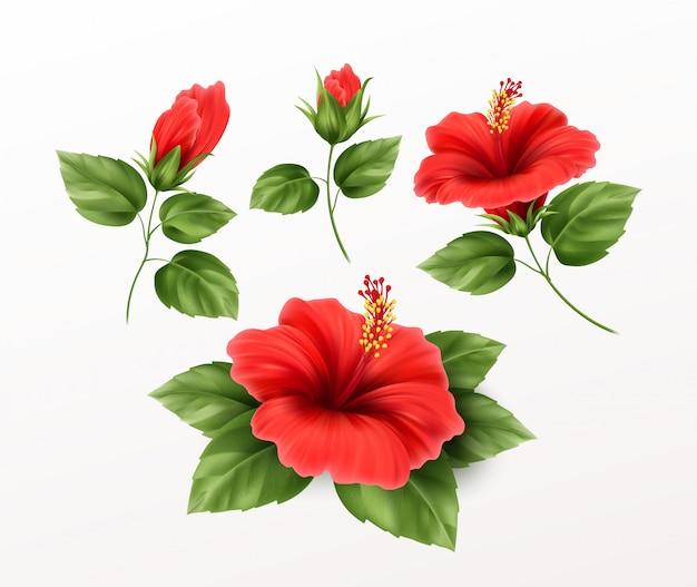 Zestaw To Piękny Kwiat Hibiskusa, Pąki I Liście Na Tle. Egzotyczne Rośliny Tropikalne Realistyczne Premium Wektorów