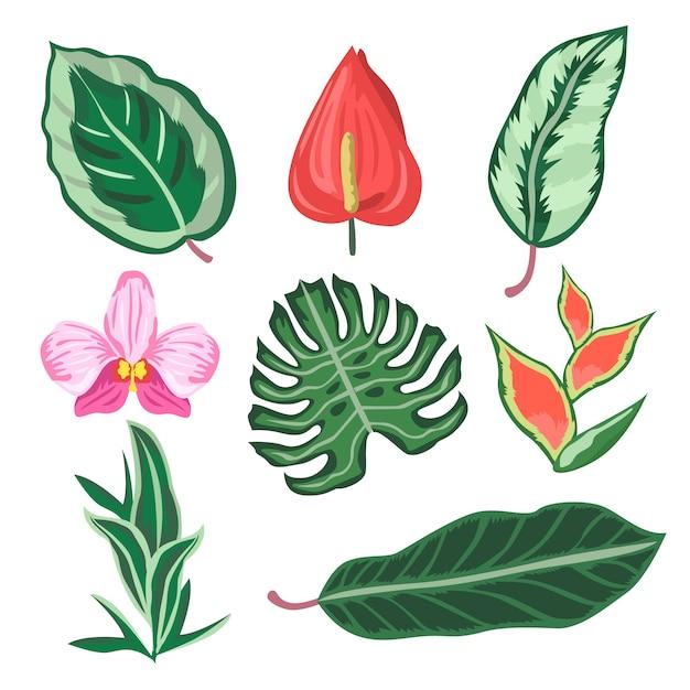 Zestaw Tropikalny Kwiat I Liść Darmowych Wektorów