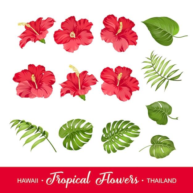 Zestaw Tropikalnych Kwiatów Premium Wektorów