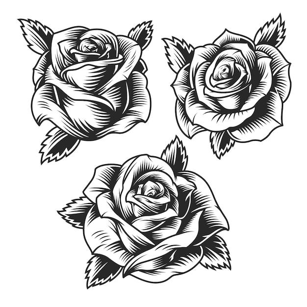 Zestaw Vintage Piękne Kwiaty Róży Darmowych Wektorów