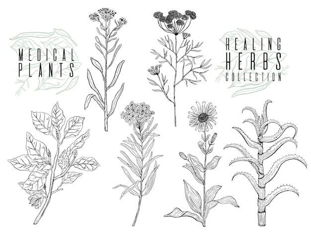 Zestaw Z Rysunkiem Dzikich Roślin, Ziół I Kwiatów, Monochromatycznych Ilustracji Botanicznych W Stylu Vintage Premium Wektorów
