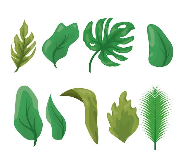 Zestaw zielonych liści na białym tle Darmowych Wektorów