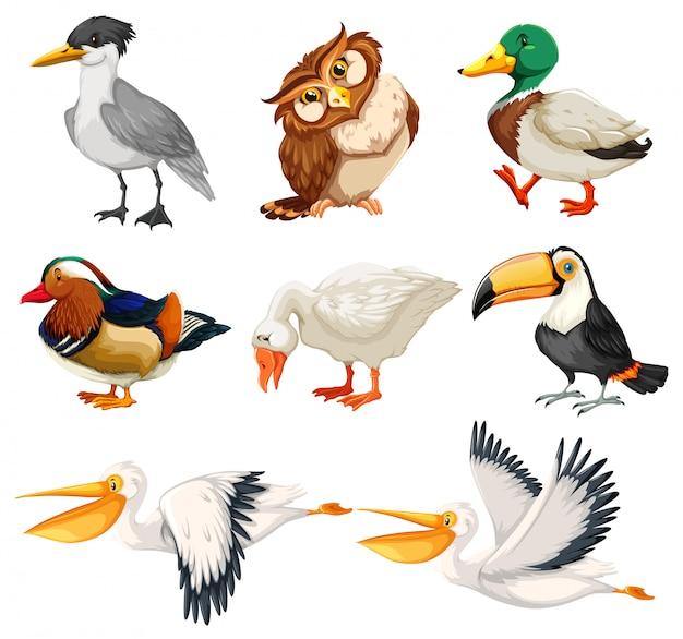 Zestaw znaków ptaków Darmowych Wektorów