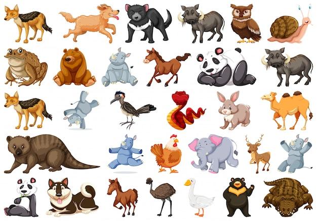 Zestaw znaków zwierzęcych Premium Wektorów
