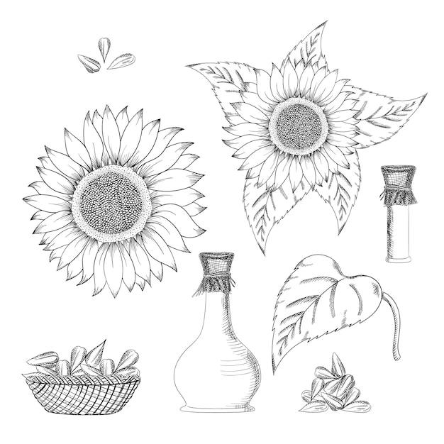 Ziarna słonecznika i kwiat wektor zestaw rysunków Premium Wektorów