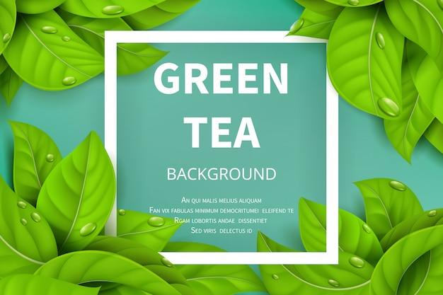 Zielona Herbata Opuszcza Wektorowego Natury Tło Premium Wektorów