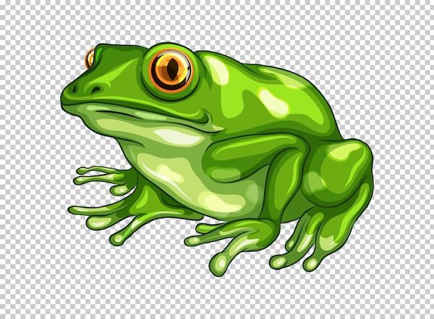 Zielona żaba Na Przezroczystym Darmowych Wektorów