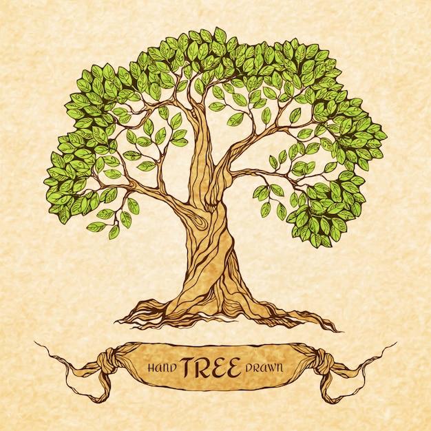 Zielone drzewo z miejscem na tekst Darmowych Wektorów