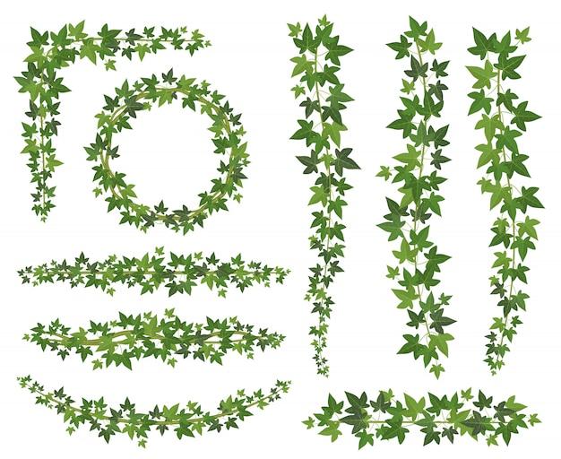 Zielony Bluszcz. Liście Na Wiszących Gałęziach Pnączy. Zestaw Do Dekoracji ściennej Bluszczu Premium Wektorów