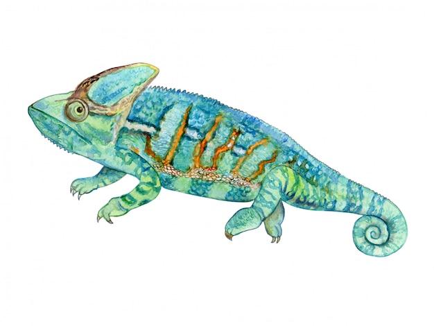 Zielony kameleon w akwareli Premium Wektorów
