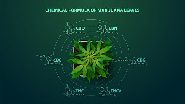 Zielony Plakat Z Wzorami Chemicznymi Naturalnych Kannabinoidów. Premium Wektorów