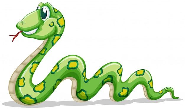 Zielony Wąż Czołgać Się Na Bielu Darmowych Wektorów