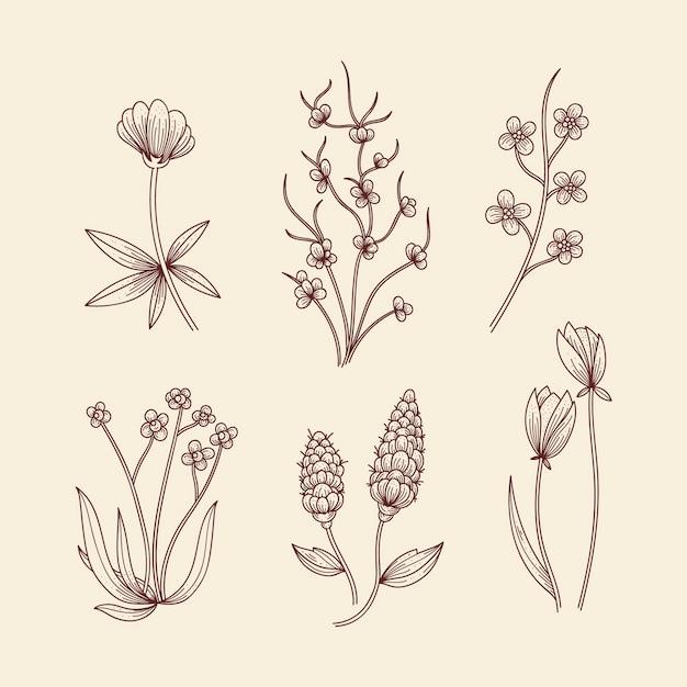 Zioła botaniczne i dzikie kwiaty w stylu vintage Darmowych Wektorów