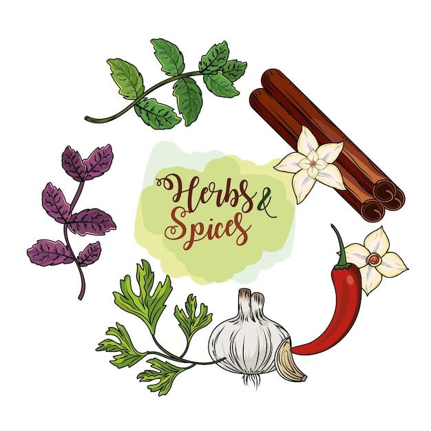 Zioła I Przyprawy Rośliny I Jedzenie Narządów Premium Wektorów