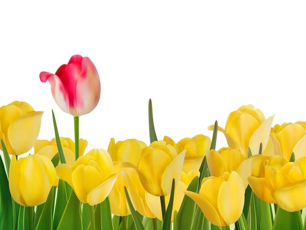 Żółte Tulipany I Jeden Czerwony. Premium Wektorów