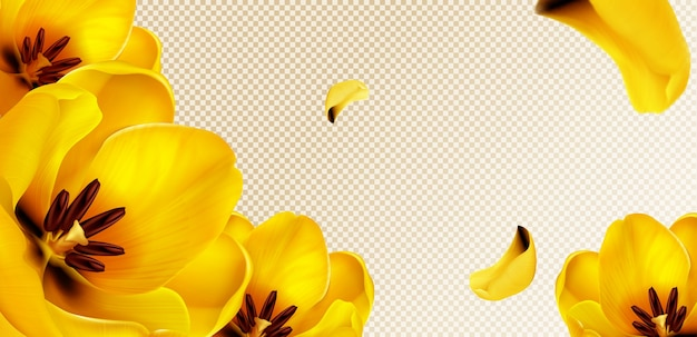 Żółte Tulipany, Latające Płatki Na Przezroczystym Tle Z Miejsca Kopiowania Tekstu. Darmowych Wektorów