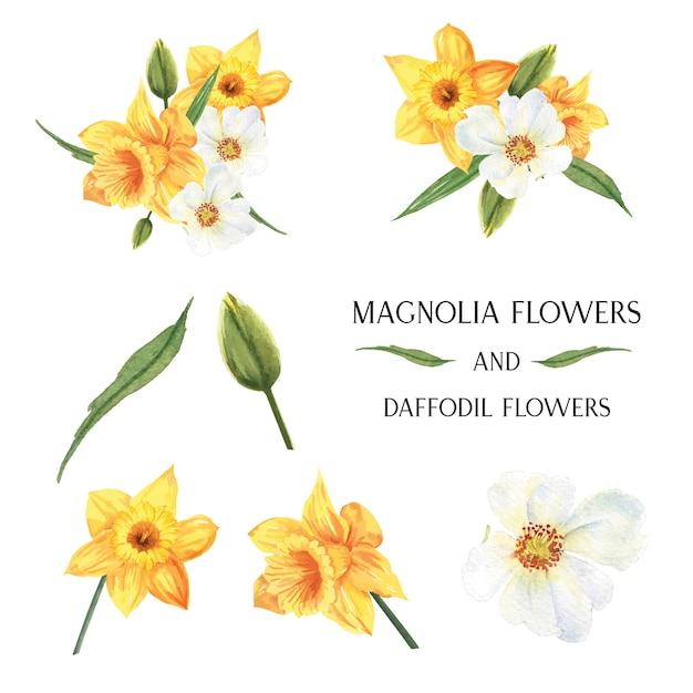 Żółty magnolia i żonkil kwiaty bukiety kwiaty botaniczne ilustracja akwarela Darmowych Wektorów
