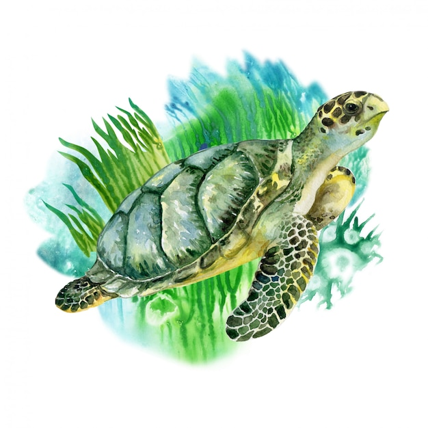Żółw Morski Zielony Z Wodorostami. życie Morskie. Akwarela Premium Wektorów