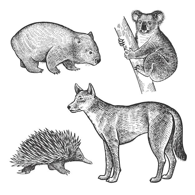 Zwierzęta australii. miś koala, wombat, echidna, pies dingo. Premium Wektorów