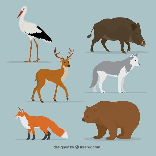 Zwierzęta Leśne Ustawione W Realistycznym Stylu Darmowych Wektorów