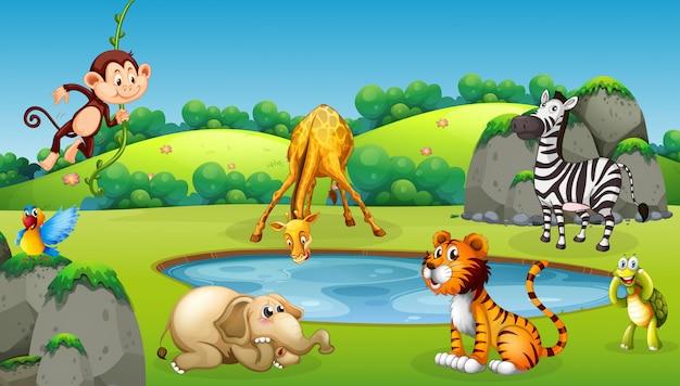 Zwierzęta Na Scenie Natury Premium Wektorów
