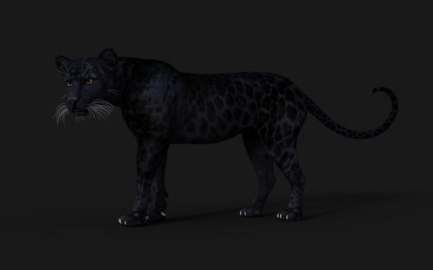 3d Ilustracja Czarna Pantera Izoluj Na Czarno Premium Zdjęcia