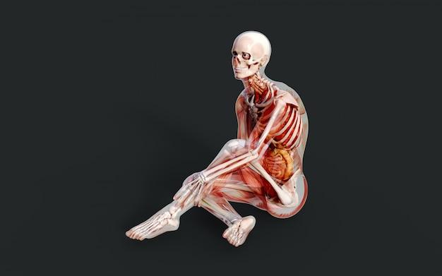 3d ilustracja męskiego układu mięśniowego szkieletu, kości i układu trawiennego ze ścieżką przycinającą Premium Zdjęcia