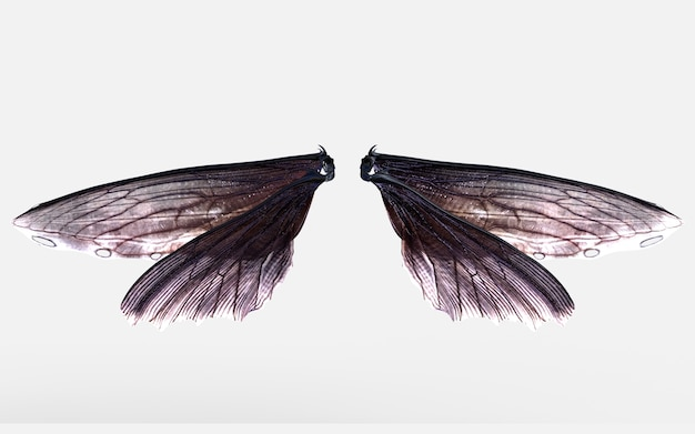 3d Ilustracja Wings Of Insect Isolate Na Szarym Tle Z Clipping Path. Premium Zdjęcia
