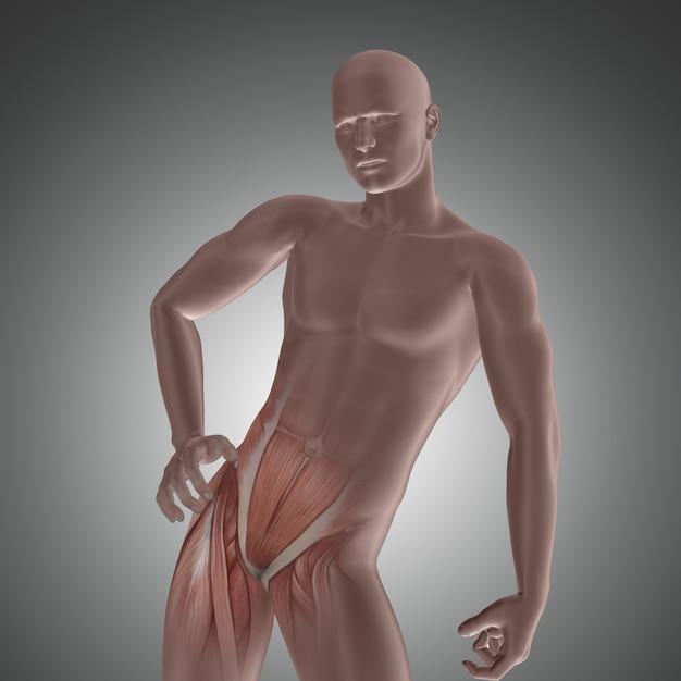 3d postać mężczyzny z podkreślonymi mięśniami bioder Premium Zdjęcia
