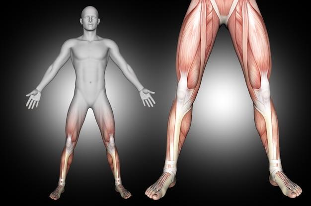 3d Render Męskiej Figury Medycznej Z Podświetlonymi Mięśniami Podudzia Darmowe Zdjęcia