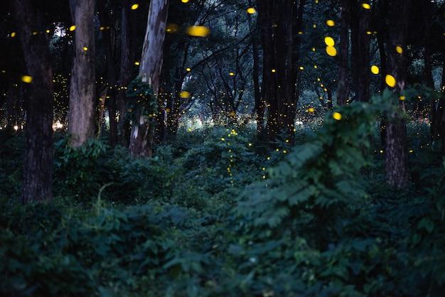 Abstrakcjonistyczny I Magiczny Wizerunek świetlika Latanie W Noc Lesie Premium Zdjęcia