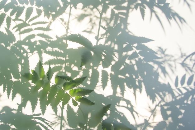 Abstrakcjonistyczny szary cień naturalni liście na białej teksturze Premium Zdjęcia