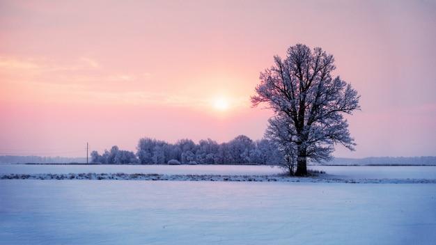 Abstrakcjonistyczny Zima Wschodu Słońca Krajobraz Z Samotnym Drzewem Kolorowym Niebem I. Premium Zdjęcia