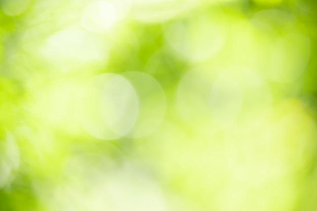 Abstrakt Zamazywał Z Ostrości I Zamazywał Zielonego Liścia Tło Pod światłem Słonecznym Z Bokeh I Kopii Przestrzenią Używać Jako Tło Naturalnych Roślin Krajobraz Premium Zdjęcia