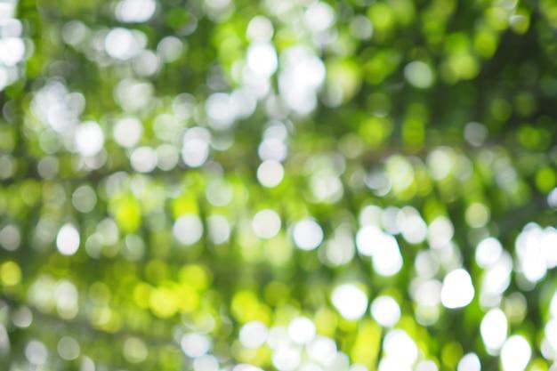 Abstrakta Zielony Bokeh Z Ostrości Tła Od Drzewa W Naturze Premium Zdjęcia