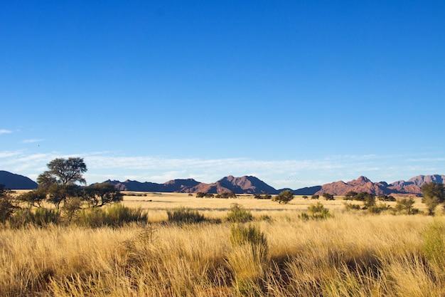 Afrykański Sawanna Krajobraz, Namibia, Południowa Afryka Premium Zdjęcia