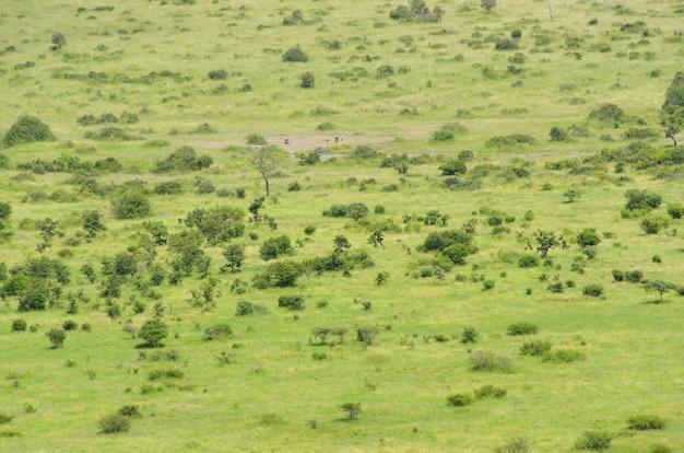 Afrykański Sawanna Krajobraz, Południowa Afryka Premium Zdjęcia