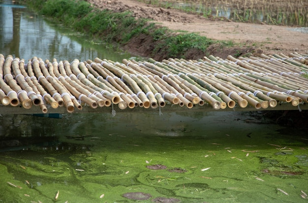 Aian bambusa most na stawowej dekoraci plenerowym ogródzie Premium Zdjęcia