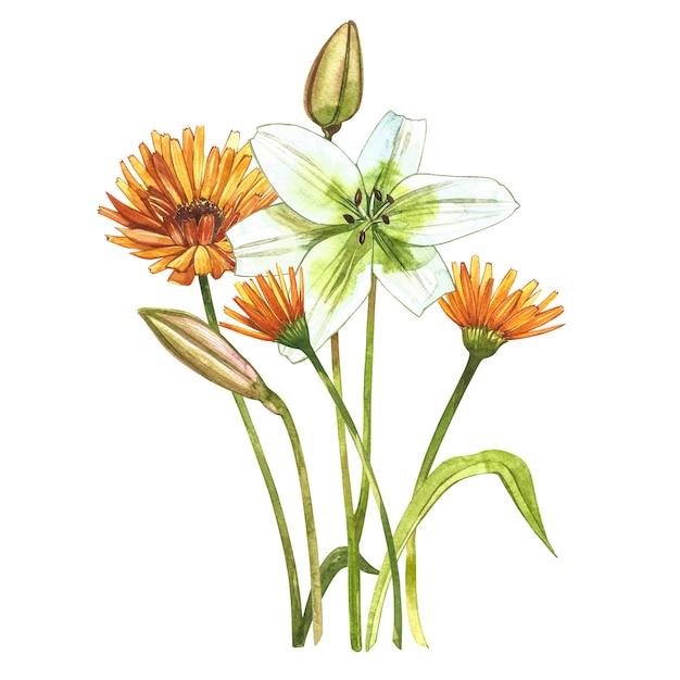 Akwarela Białe Lilie. Dziki Kwiat Ustawia Odosobnionego Na Bielu. Premium Zdjęcia