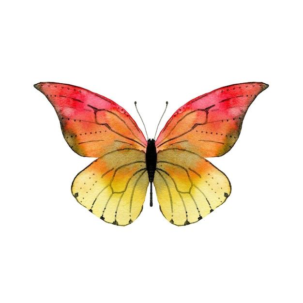 Akwarela Czerwony Motyl Premium Zdjęcia