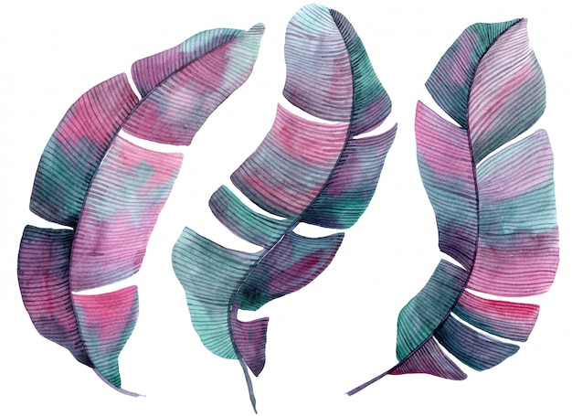 Akwarela Ilustracja Z Palm Różowy I Liliowy Liści Premium Zdjęcia