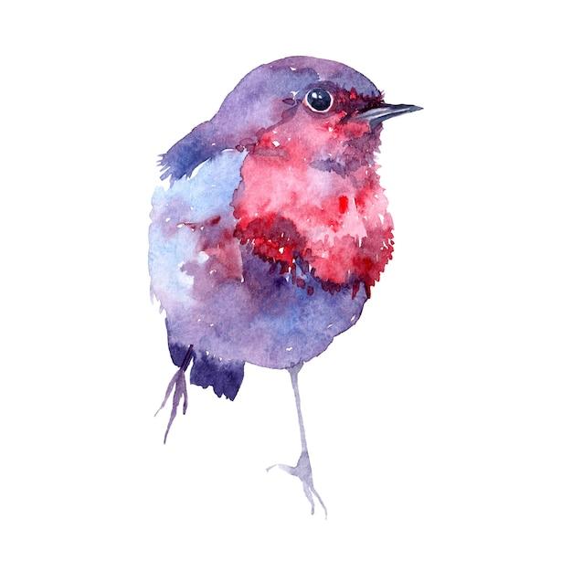 Akwarela Ilustracja Z Ptakiem. Premium Zdjęcia