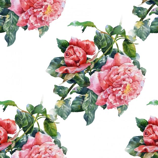 Akwarela Malarstwo Kwiaty, Róża, Wzór Na Białym Tle Premium Zdjęcia