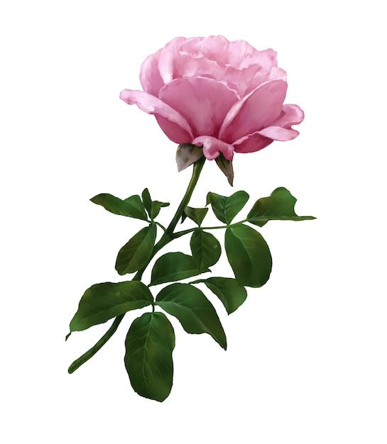 Akwarela Malarstwo Liści I Kwiatów Róży Na Białym Tle Premium Zdjęcia