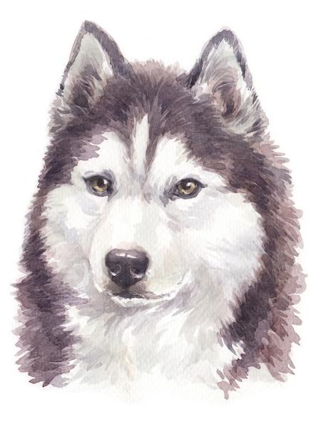 Akwarela Malowanie Psów, Brązowo-biały Kolor Siberian Husky Premium Zdjęcia