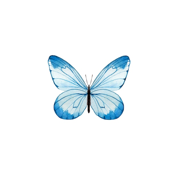 Akwarela Niebieski Motyl Premium Zdjęcia