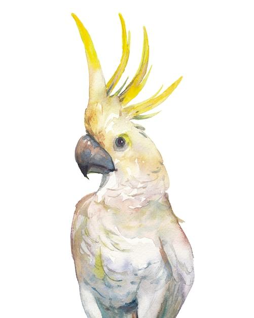 Akwarela Zwrotnik Ptak: żółty Kakadu Czubaty. Pojedyncza Papuga Na Białym Tle Premium Zdjęcia