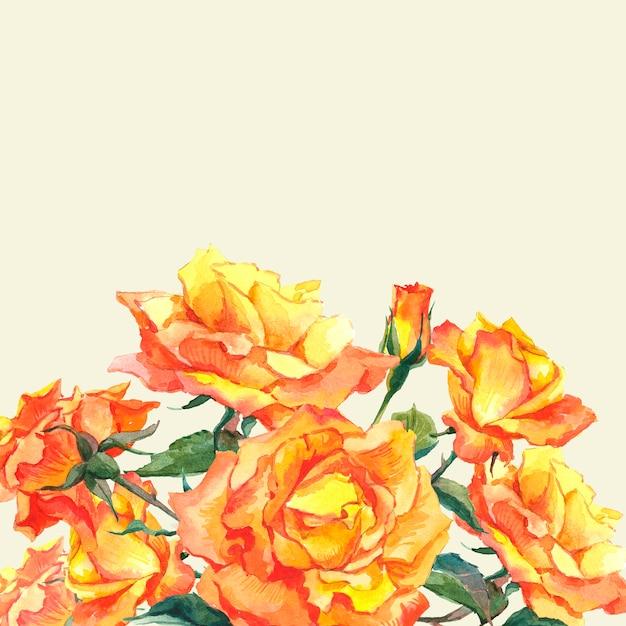 Akwarele Karta Z żółtymi Ogrodowymi Różami Premium Zdjęcia